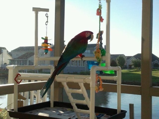 Pvc pipe parrot play stand perch diy birds pinterest for How to build a bird stand