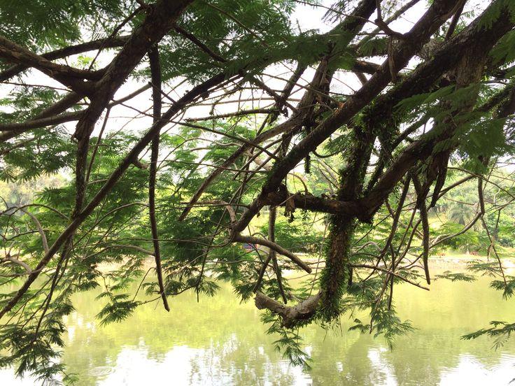 29/08/2016 - observing nature