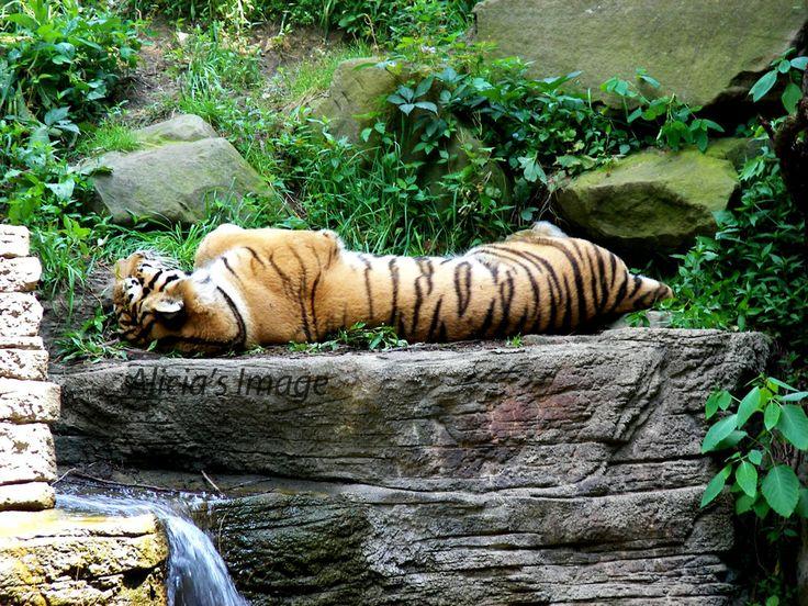 Potawatomi Zoo #Coupons & #Discounts #2017 #SouthBend #Indiana #potawatomizoo #thingstodo #traveldeals #vacation  http://www.theknowandgo.com/potawatomizoocoupons