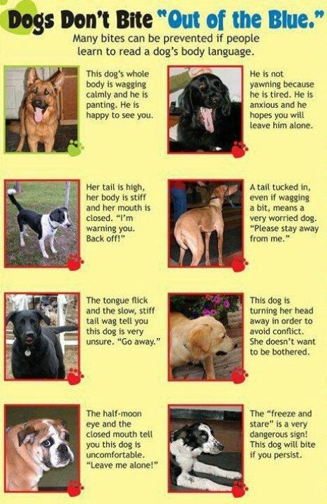 Learn 2 Read A Dog's Body Language