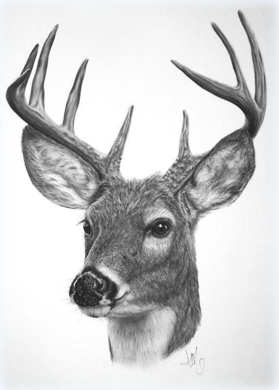deer antlers drawing easy - photo #43