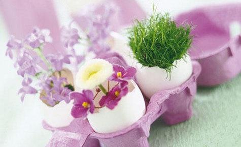 Eierschalen mit Kresse bepflanzen - als Deko oder als Geschenk