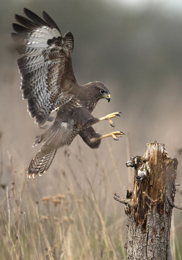 Hawk and prey The hawk is my spirit guide! Awesome!