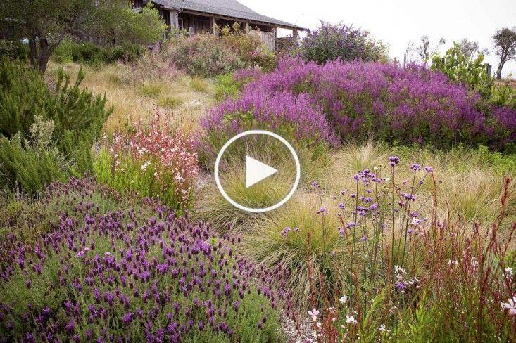 Conseils d'experts 8 conseils pour un jardin de prairie