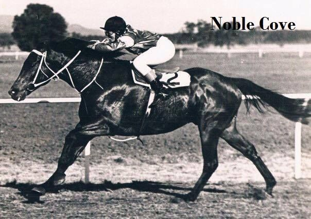 1994 saw Rhonda have a great association with Noble Cove setting a weight carrying record on this day winning the Wean Cup when he lumped 74kg/163lbs. He later went on to win with 77kg/169lbs and 78kg/171lbs. Rhonda tasted success on Noble Cove an incredible 16 times from 18 rides on him.