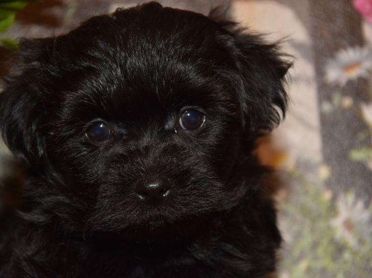 Herzlich Willkommen Bei Meiner Hundezucht Ich Zuchte Reinrassige