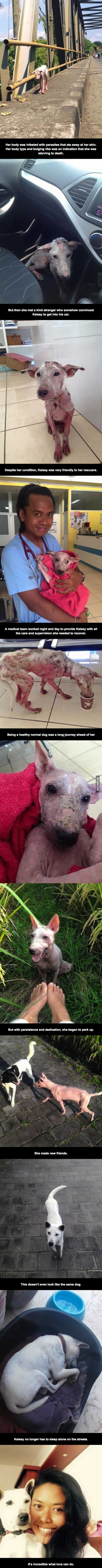 Animal rescues are one of the few good things about people.