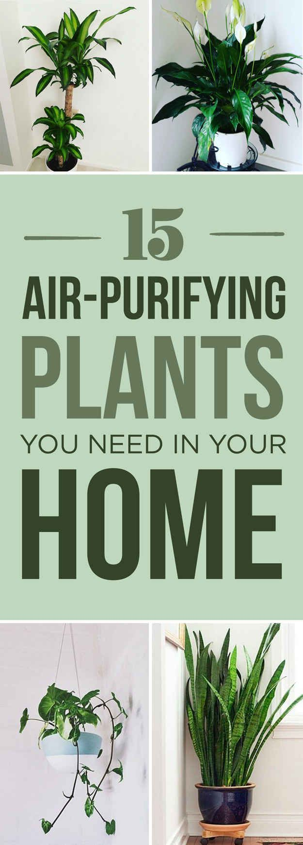 15 Beautiful House Plants That Can Actually Purify Your Home More