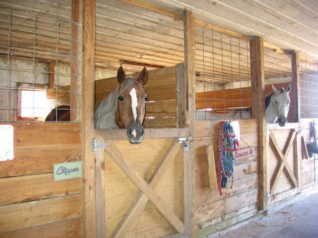 Horse Stall Idea Would Like Without The Fence Tho