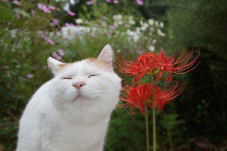 Shironeko the flower Buddha.