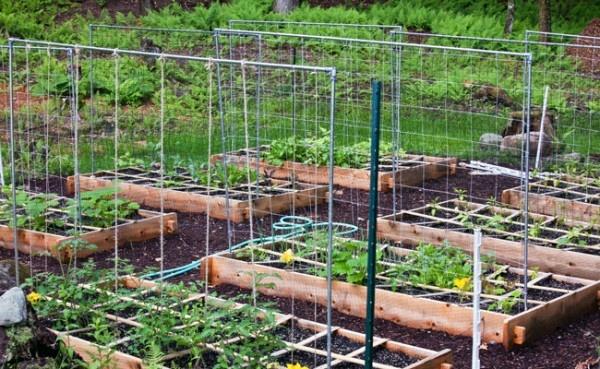FREE BOOK (click here for details)Rai Beds Gardens, Iron Headboards, Squares Foot Gardens, Organic Gardens, Gardens Trellis, Vegetables Gardens, Tomato Trellis, Tomatoes Trellis, Gardens Plants