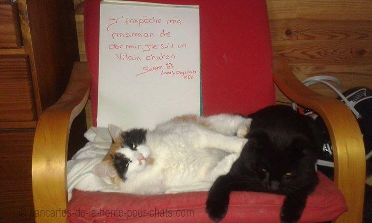 Oh ben yen a beaucoup des vilains chatons dans le monde alors ^^ Jetez un coup d'œil à la page de leur maman :