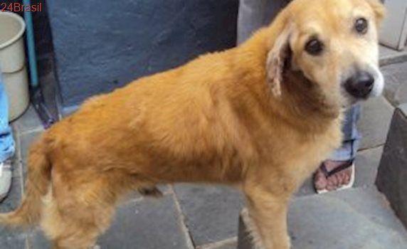 Cão idoso que vivia acorrentado desde filhote aguarda adoção em SP