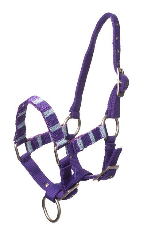 #Halster voor uw #paard minipaard #shetlander. Bestel nu bij MiniHorseShop de specialist voor #minipaarden en shetlanders