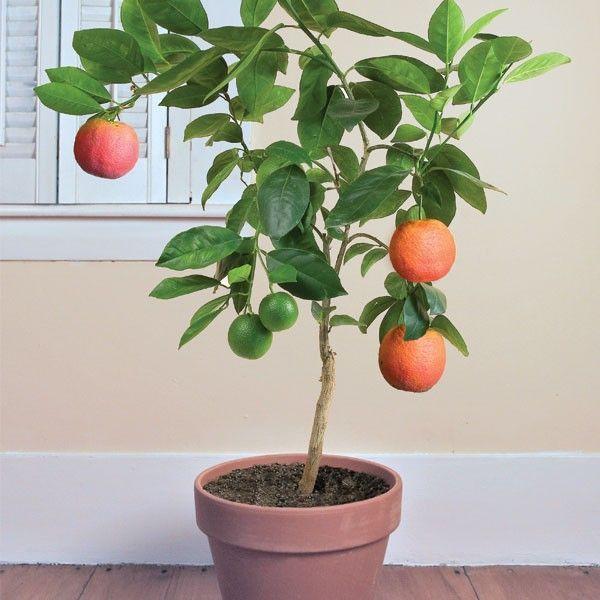 261 mejores imágenes de plantas en pinterest | jardinería, plantas