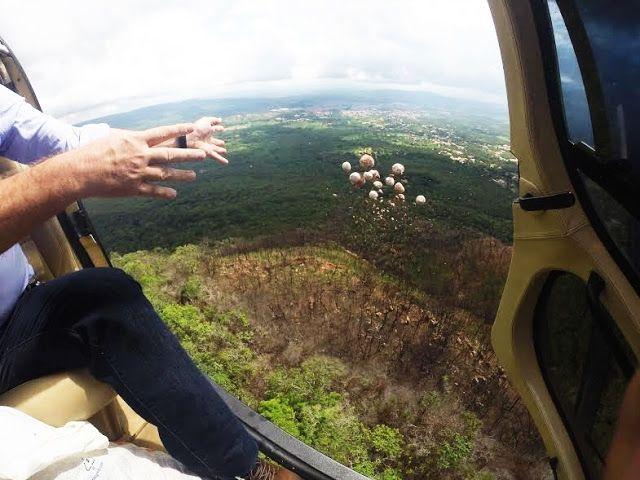 Águas de Pontal: Bombas de sementes são usadas em reflorestamento d...