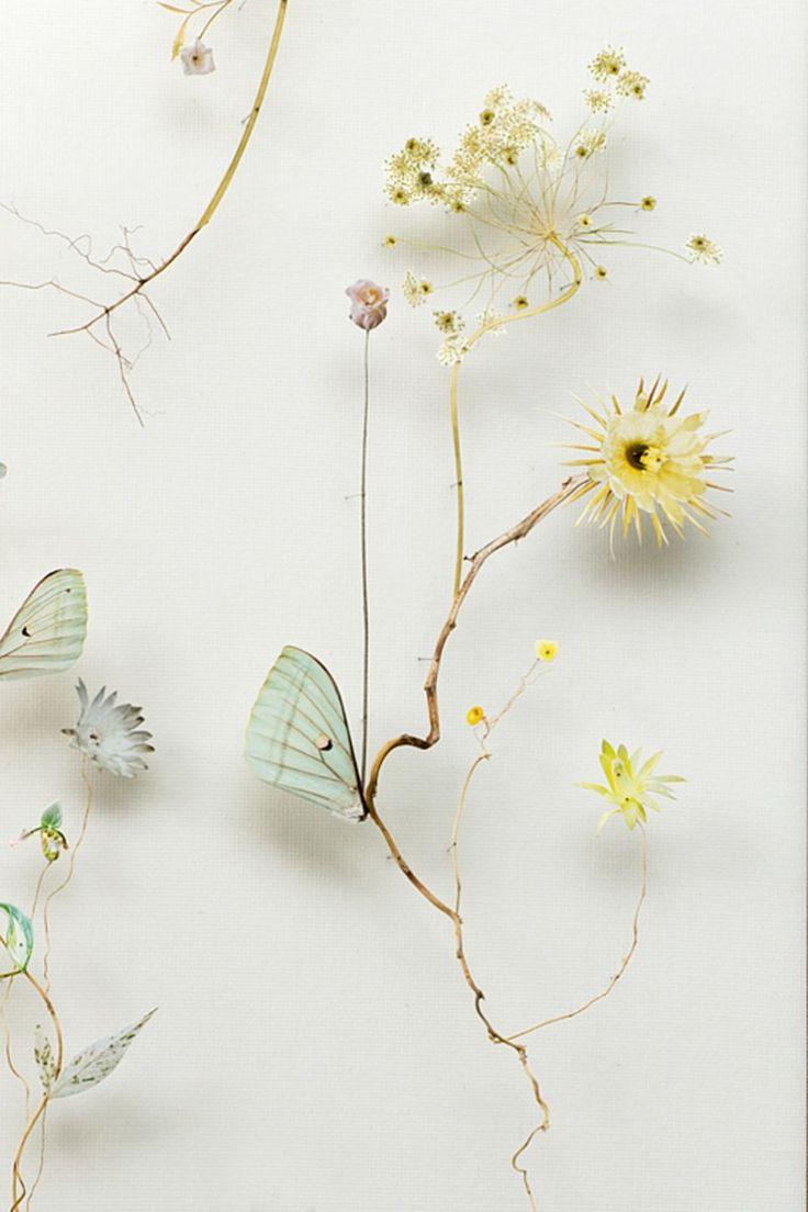 Anne Ten Donkelaar 142-flower_construction_#45_02_inpostV — ThePlanthunter