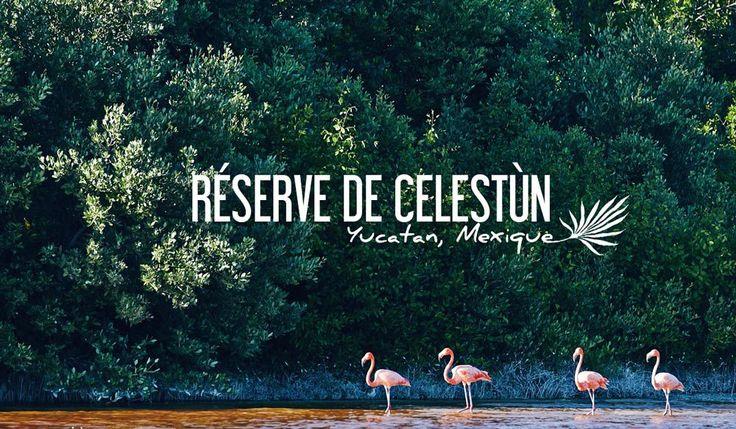 Ne ratez pas Celestún et sa colonie de flamants roses, une belle expérience au coeur d'une nature exceptionnelle dans le Yucatán, entre mangrove et plage.