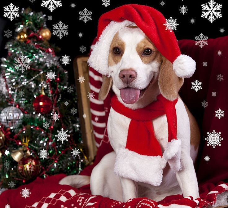 Holidays Christmas Dogs Beagle Winter hat Christmas tree Snowflakes New year, New Year tree Animals