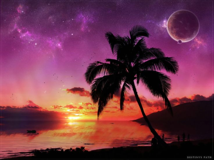 Sunset Over The Beach Palm Tree Moons Stars X 1440 Px