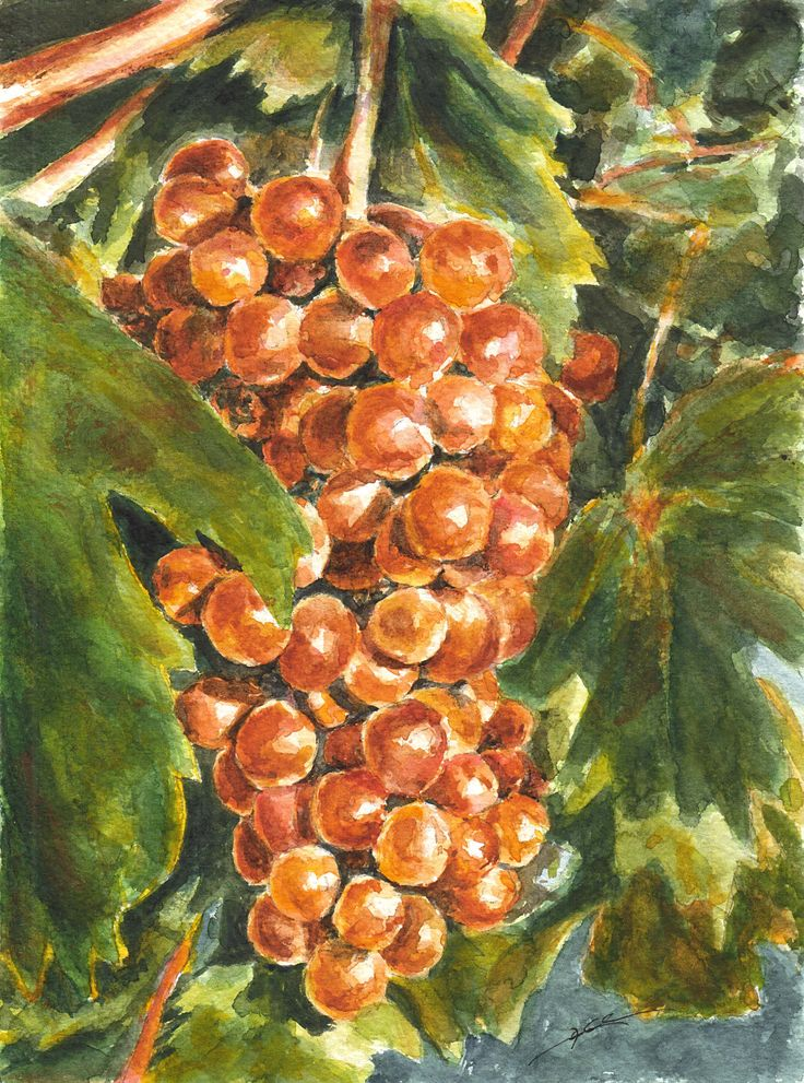 Yellow grapes by Maga Fabler; watercolor