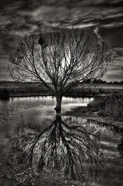 Water Reflection Photography Black And White 18 best images ...