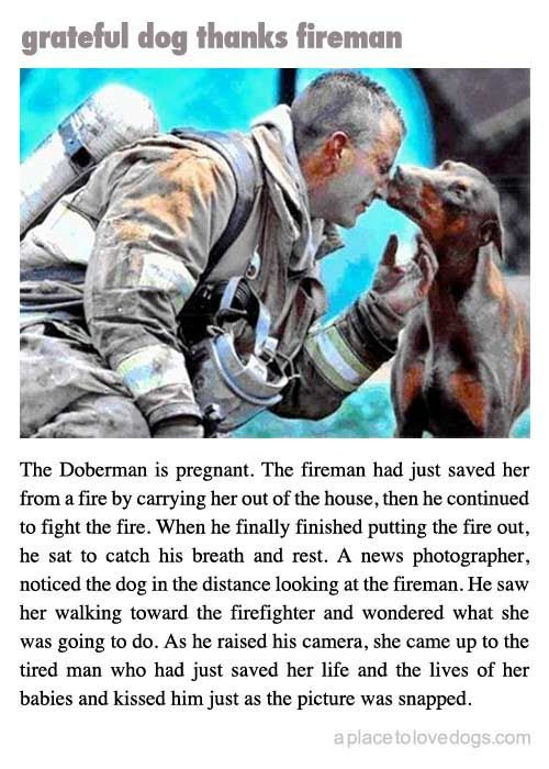 Fireman saves pregnant Doberman