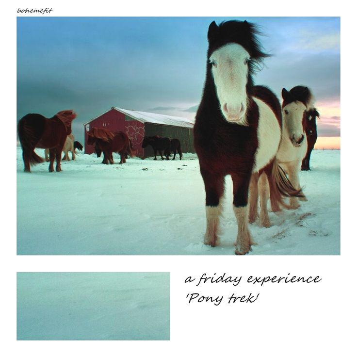 friday experience 'Pony trek' #bohemefit ☾