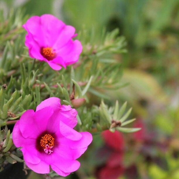The Purple Flower -bokeh- Photo by priskawibisana