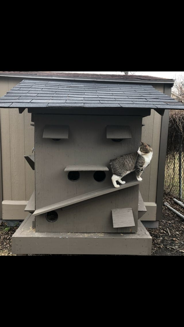 Feral cats condo made out off a shipping crate