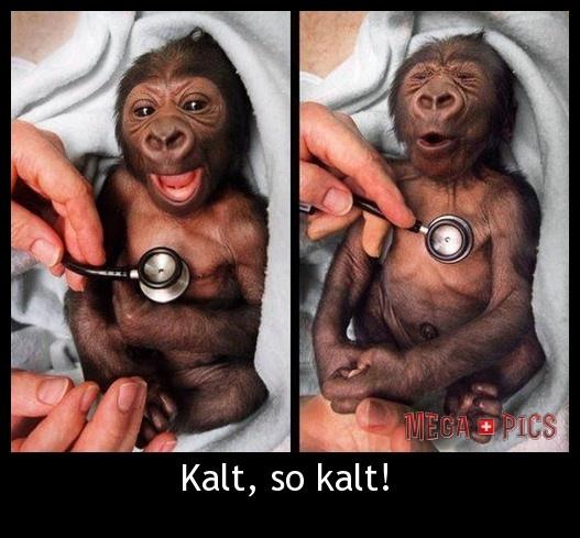 Kalt, so kalt! - MegaPics.ch. Lustige Bilder, witzige Pics, fun Clips, fail Videos.