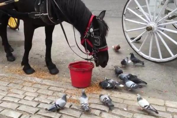 Это надо видеть: лошадь кормит голубей в Нью-Йорке https://joinfo.ua/inworld/1198955_Eto-videt-loshad-kormit-golubey-Nyu-Yorke.html  Кормить голубей любят не только бабушки-пенсионерки, но и лошади. Об этом свидетельствует забавное видео, снятое одним из туристов в Нью-Йорке.Это надо видеть: лошадь кормит голубей в Нью-Йорке, подробнее...