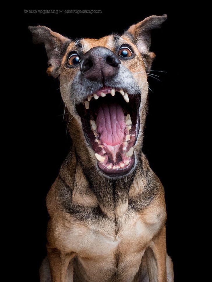 Лена гнедкова, собака на картинках приколах