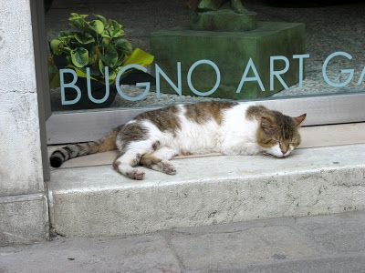 cat nap gallery front - Blipadee: Animals in Venice!