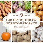 9 Uprawy rosnąć przez Przechowywanie żywności