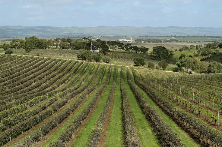 McLaren Vale is well known for its abundance of wineries..