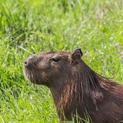 Infinidad de especies habitan el Parque Nacional de Mburucuyá en la provincia de Corrientes.