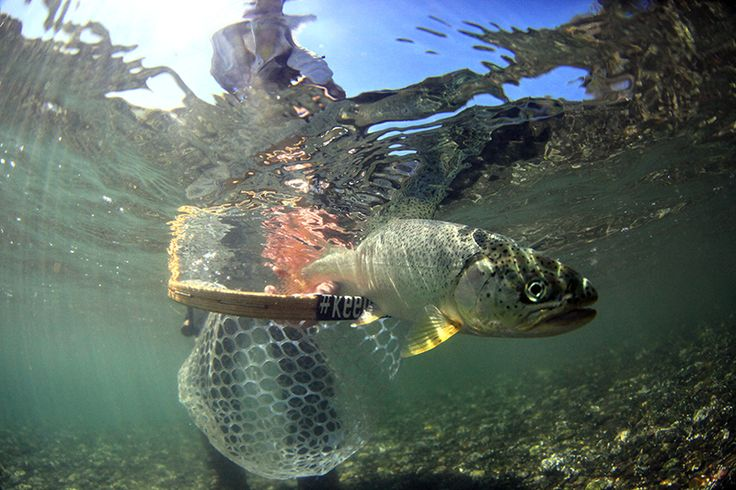36 best the essence of fly fishing images on pinterest for Puget sound fly fishing