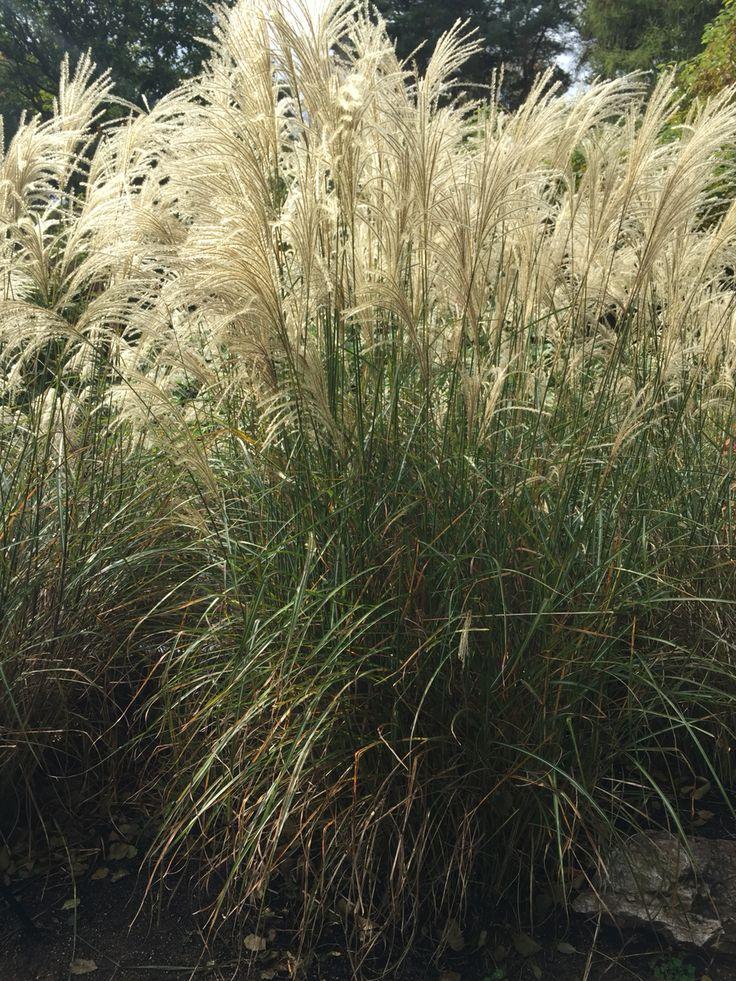 17 best images about chicago botanic garden field trip october 15 2015 on pinterest gardens. Black Bedroom Furniture Sets. Home Design Ideas