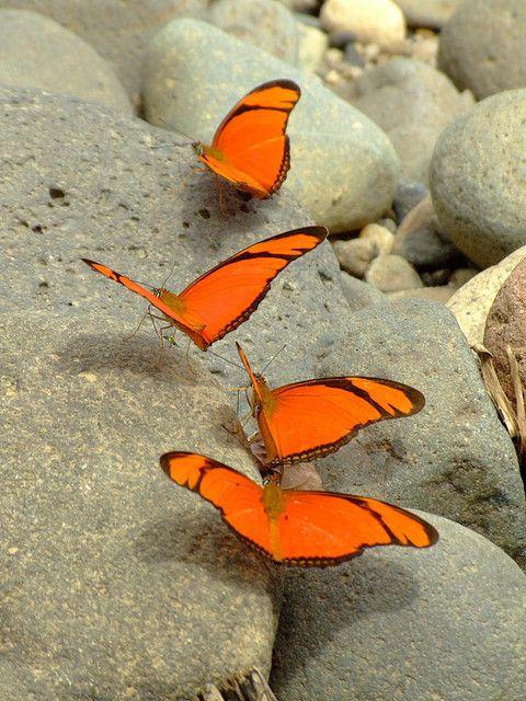 """""""Butterflies-On-The-Rocks."""""""