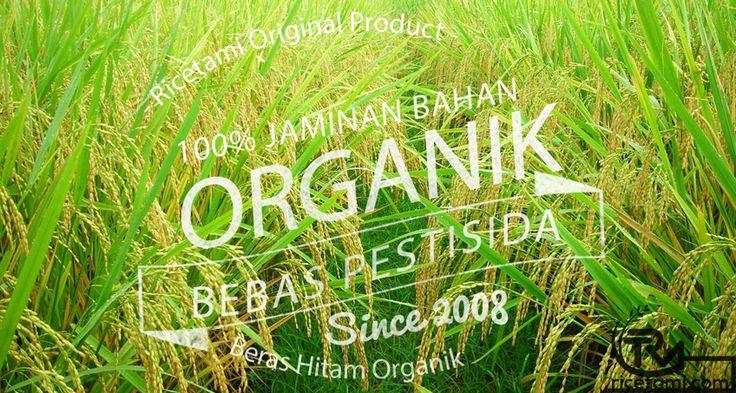 Khasiat Beras Organik