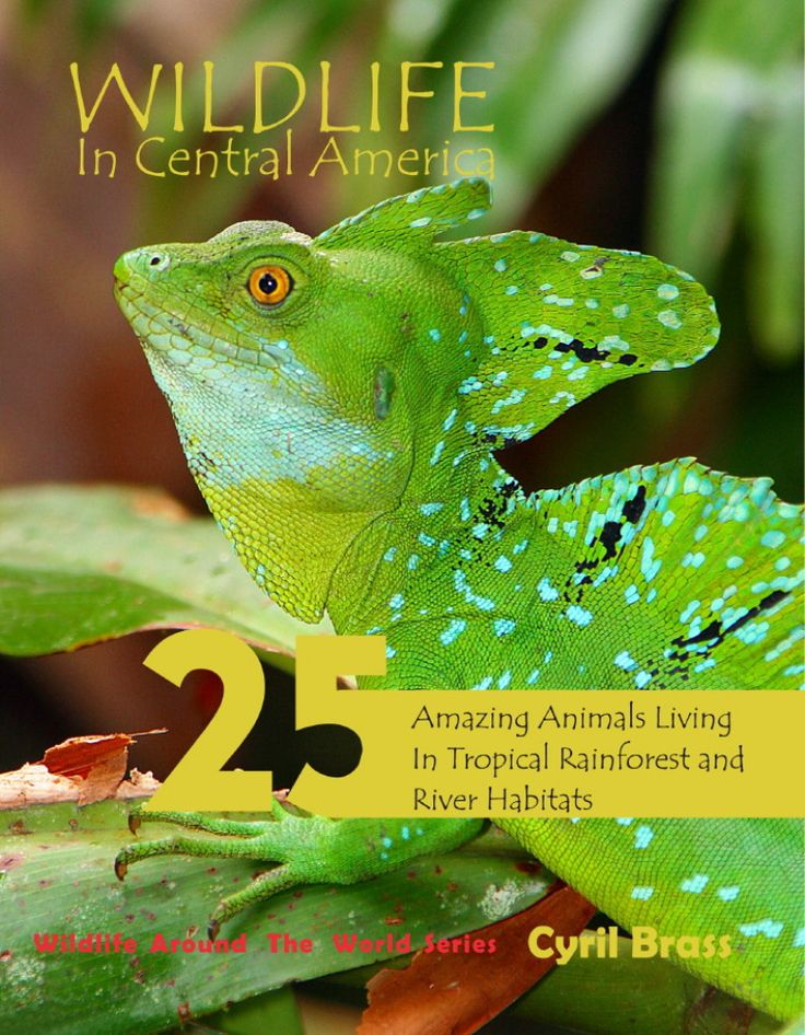 Wildlife in Central America; 25 Amazing Animals Living in Tropical Rainforest and River Habitats. Part of Wildlife Around the World Series. Photographs and Text by Cyril Brass.  Front Cover