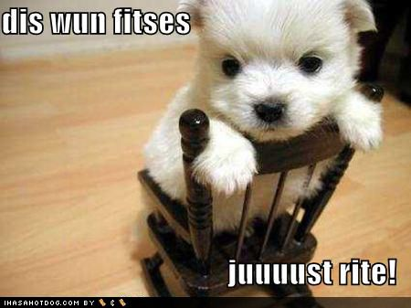funny puppies   Cute pups with funny captions! - Teddybear64 Photo ...