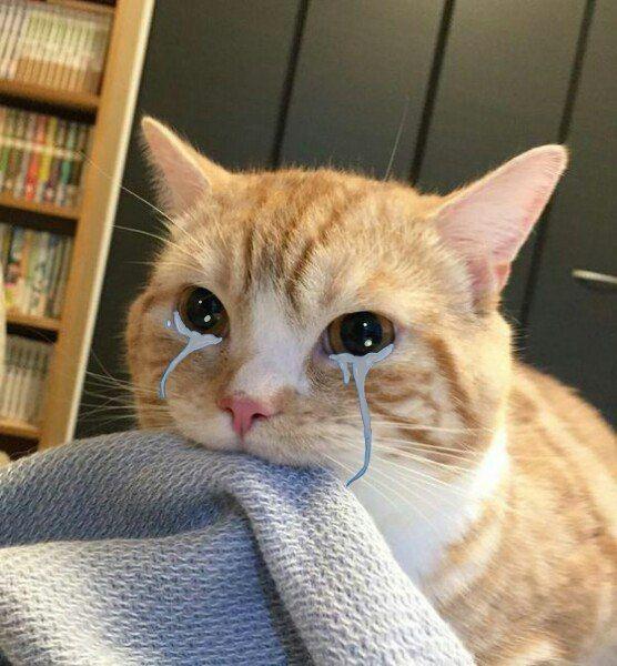 Anime tumblr | Смешные фото кошек