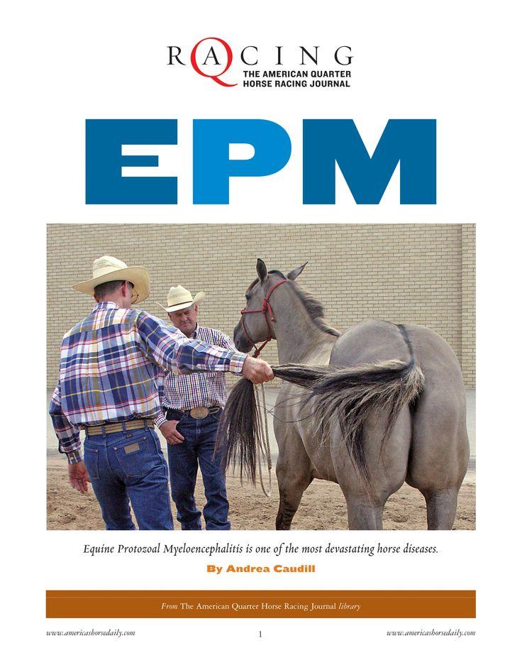 equine protozoal myeloencephalitis epm essay Equine protozoal myeloencephalitis (epm), is a disease caused by the  apicomplexan parasite  jump up ^   jump  up ^ freedom of information summary: nada 141-240, rebalance  antiprotozoal oral.