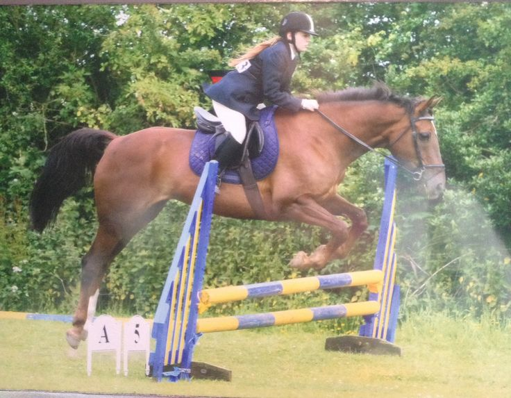 Me and beau doing some show jumping