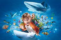 Charlotte-Concord Sealife aquarium