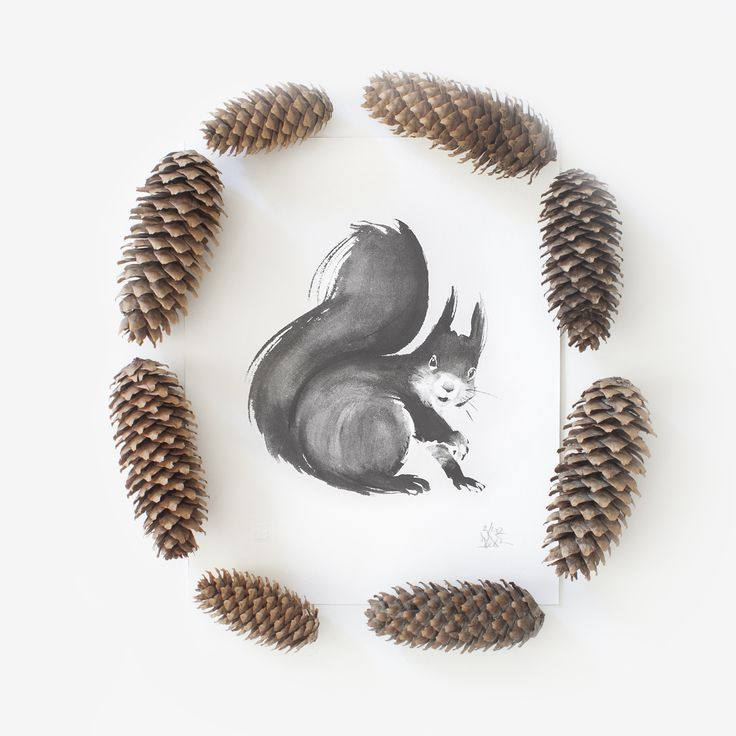 Squirrel & Spruce Cones Teemu Järvi Illustrations http://www.teemujarvi.com/en/shop/paper-prints/78-squirrel.html