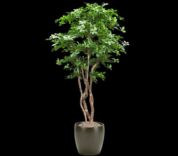 Artificial Oriental Black Olive Tree - Commercial Silk Int'l