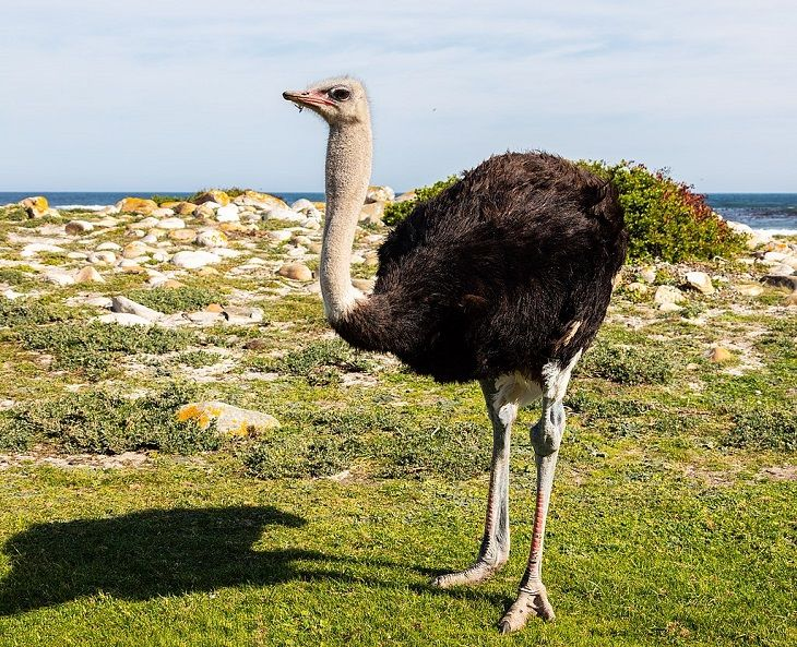 10 Incredible Animals Built to Survive in the Sahara